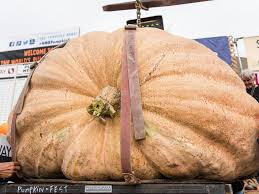 Heaviest Pumpkin Ever by Teacher Squashes Competition With 1 910 Pound Pumpkin In Half Moon