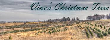 Canaan Fir Good Christmas Tree by Fraser Fir U2013 Vines Christmas Trees