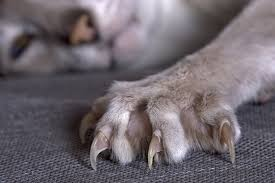 how to cut a cats nails how to safely trim a cat s claws safebee