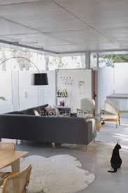 schwarze katze in luxus haus vitrine interieur wohnzimmer