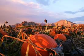 Roloff Pumpkin Patch by Don U0027t Miss These Great Pumpkin Patches In Oregon This Fall