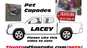 LACEY At 2017 Pet Capades At Santa Fe Place Mall For Toyota Of Santa ... Lacey Fire Twitter Traffic Advisory Meridian Ne At Martin Way Pe14xvr L7736 Eddie Stobart Scania Anne Portswood Flickr The Lady B17 Bomber Will Fly Again After 67 Years Youtube Early Dmissal Fire Township Middle School On While You Were Sleeping Lfd3 Crews Ac Compressor 2000 Gmc Sierra 2500 Pickup Used Auto Parts What A Waste Manure Truck Spills Its Load In Rndabout Near Josh Lacey Los Banos Sled Pulls 2012 Dalton Laceyladalton Familycar Conundrum Pickup Truck Versus Suv News Carscom John From Joplin Missouri Examines His For Damage