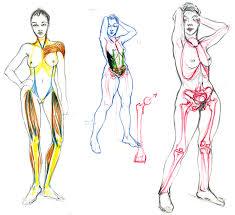 interieur corps humain femme morphologie laurine moreau illustration scientifique