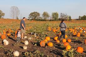 Pumpkin Patch Columbus Wi by Dodge County Farm Has More Than Just Pumpkins Regional News