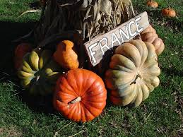 Pumpkin Patch Arthur Il by Moultrie County Mapio Net
