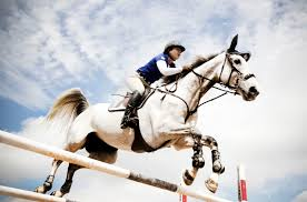 100 Wellington Equestrian Club Welcome To Horse Town USA Where Fla Is The