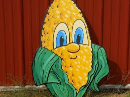 Pumpkin Picking Nj Corn Maze by Etsch Farms Monroe Township Nj Hay Straw Corn Hayrides