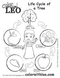 Pdf Coloring Page For Kids Life Cycle Of A Tree Jpg