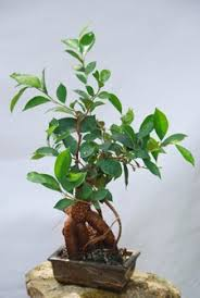 zimmerpflanzen nach feng shui wohnen de ratgeber