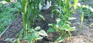 Types Of Pumpkins Grown In Uganda by Crop Rotation For Growing Vegetables