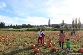 Swan Pumpkin Patch Snohomish by October In Seattle Pumpkin Farms Go Strollers