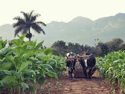 A Travel Guide To Cubas Tobacco Region Pinar Del Rio