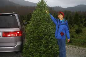 Pipe Creek Christmas Tree Farm by Photos 2002 2017 U2013 Her Final Years Extremegeographer Com