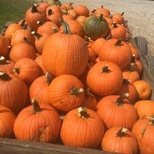 Myers Pumpkin Patch Facebook by Morris Orchard Posts Facebook