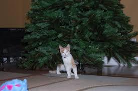 Colorado Springs Christmas Tree Permit 2014 by Cats Kimberly Hope
