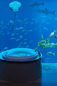 100 Water Discus Hotel In Dubai Underwater The Neptune Suite At Atlantis The Palm