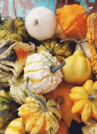 Kent Ohio Pumpkin Patches by 2306 Best Pumpkins Pompoenen Images On Pinterest Pumpkins