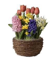 flowering bulb gardens bulb gifts wind weather