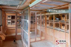 100 Pigeon Coop Plans Loft And Loft Design Simple Loft
