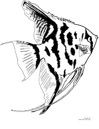 Freshwater Aquarium Angelfish Line Art For The 85 X 11 Printable Size Click Here Return To Coloring Pages Index