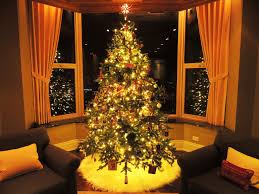 Fraser Fir Christmas Trees Delivered by Award Winning Fraser Fir Christmas Trees In Chicago City Tree Delivery