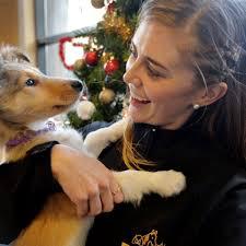 Wisdom Panel 30 Breed Identification Dog DNA Test Kit Chewycom