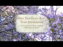 Morgan Hill California Pumpkin Patch by Olguin U0027s Tree Service 408 687 1276 General Tree Services In