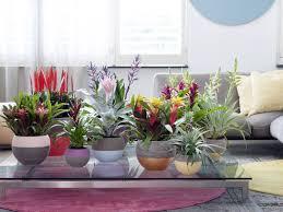 die fantastische wirkung der bromelienfarben pflanzenfreude