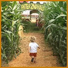 Sauvies Island Pumpkin Patch Corn Maze by Portland Corn Maze The Maize At The Pumpkin Patch