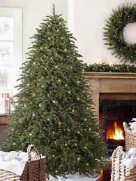Shasta Fir Tree 2015 5