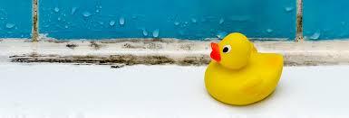 so werden sie schimmel im bad wieder los bad co
