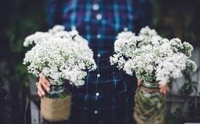 Vintage Wedding Flowers In Jars 4K HD Desktop Wallpaper For