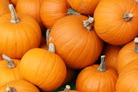 Varieties Of Pie Pumpkins by Learn How To Grow Pumpkins Just In Time For Halloween
