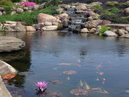 Aquascape Patio Pond Australia by 3160 Best Ponds Images On Pinterest Water Gardens Pond Ideas