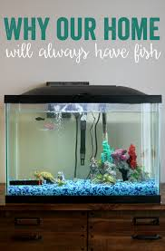 PetSmart Fish Why our home will always have fish Kendall Rayburn
