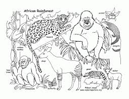 Printable Rainforest Animal Coloring Pages Free