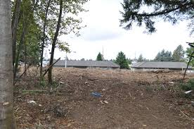 Pumpkin Patch Near Tacoma Washington by Real Estate Agent In Tacoma Wa