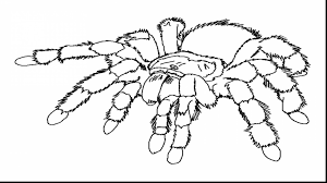 Terrific Spider Coloring Pages Printable With Page