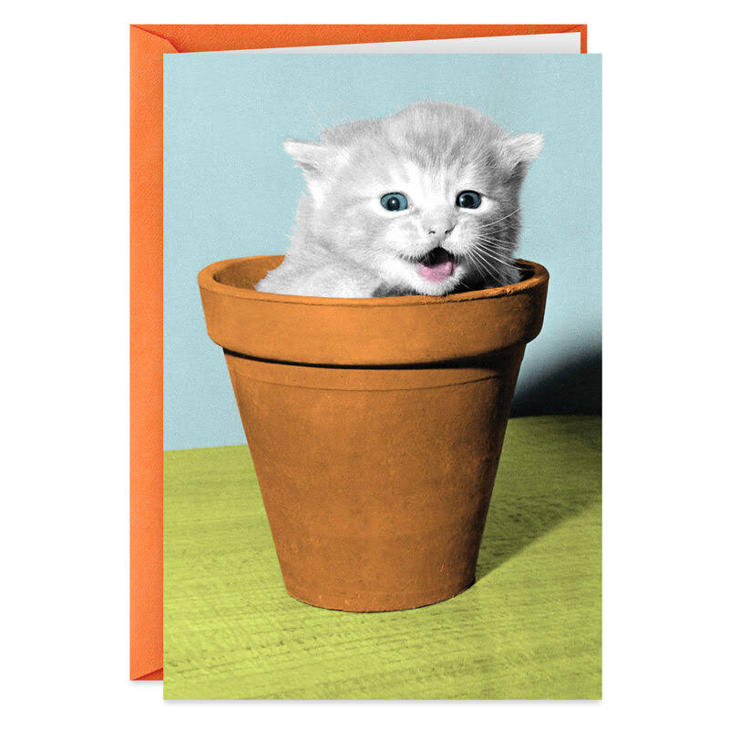 Cat in Flowerpot Funny Birthday Card
