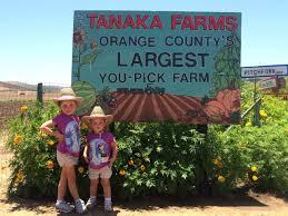 Tanaka Pumpkin Patch Irvine by Tanaka Farms Strawberry Tour Oc Mom Blog Oc Mom Blog