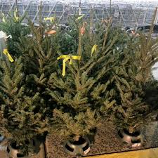 Charlie Brown Christmas Tree Cvs by Robert Dyer Bethesda Row November 2012