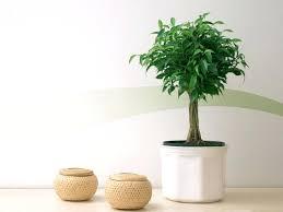 plante chambre plante pour chambre plantes et fleurs pour une maison feng shui