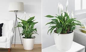 wohnzimmerambiente durch pflanzen aufwerten