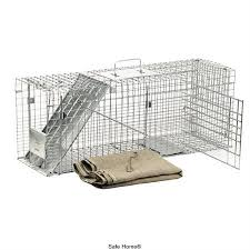 live cat trap 35 best feral cats images on feral cats feral cat