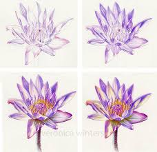 Best 20 Pencil Sketches Of Flowers Ideas On Pinterest