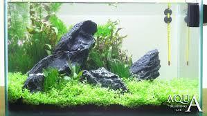 Tutorial Natural Iwagumi Aquarium