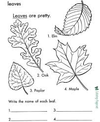 Tree Leaves Trucks Coloring Pages