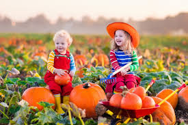 Pumpkin Patch Tampa 2014 by Best Photographic Pumpkin Patches In Orange County Cbs Los Angeles