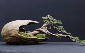 erin bonsai pottery eng top shelf bonsai pots