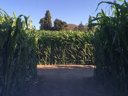 Pumpkin Patch San Fernando Valley 2015 by Best Corn Mazes Near Los Angeles Cbs Los Angeles